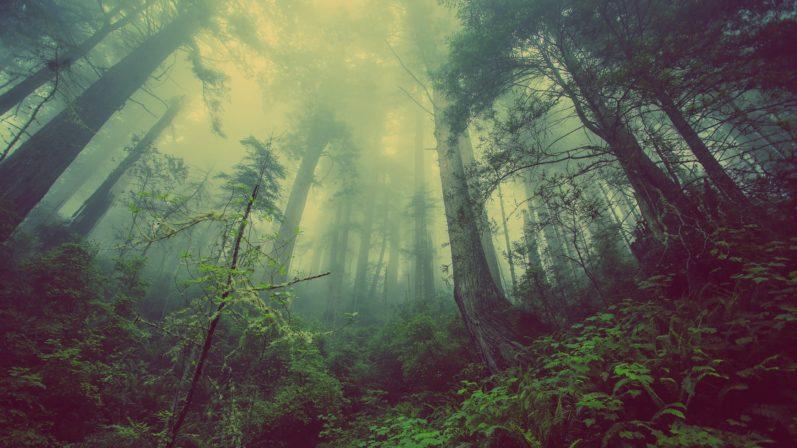 Direito Ambiental – STF dá novas diretrizes para Código Florestal Brasileiro