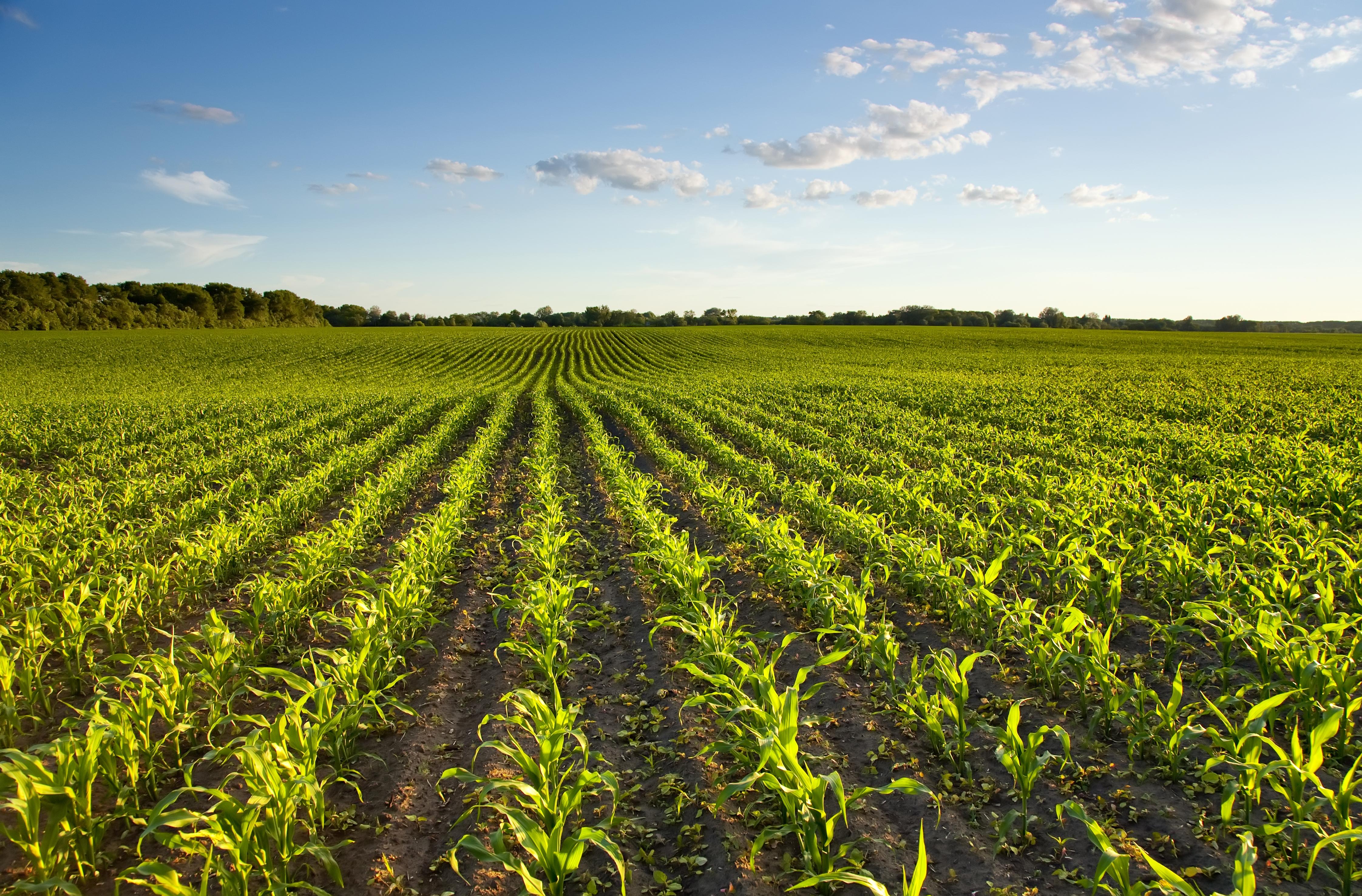 Direito do Agronegócio – Quebra na Safra – Sementes com defeito